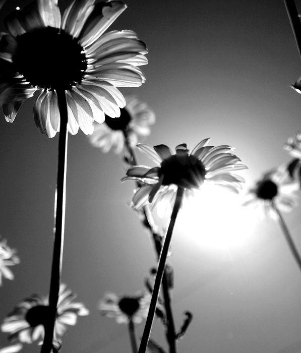 Photo fleur noir et blanc - Centerblog
